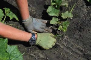 Gardening with gloves on