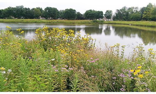 Cambridge Park Lake