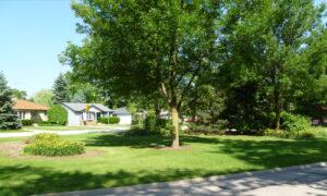 Lone Tree Park view